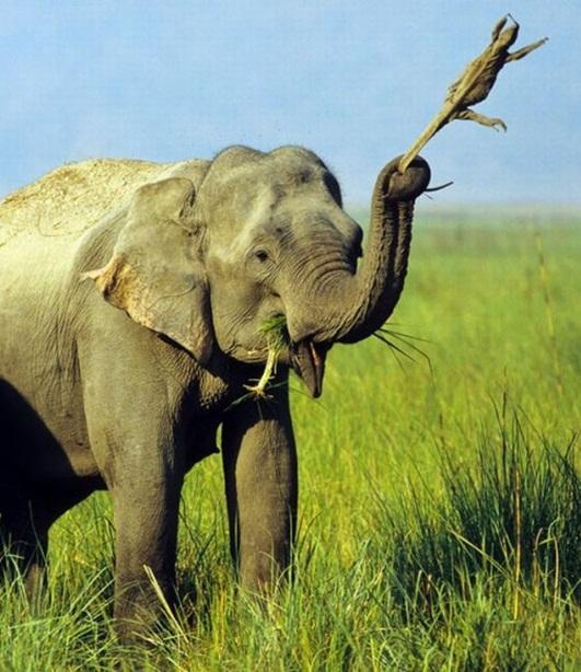 游戏资讯_20张最有爱的动物照片!_精彩贴图_西部e网